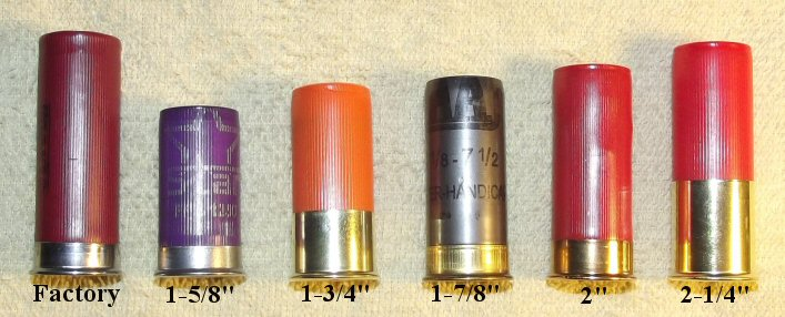 Short Shells (lengths).jpg